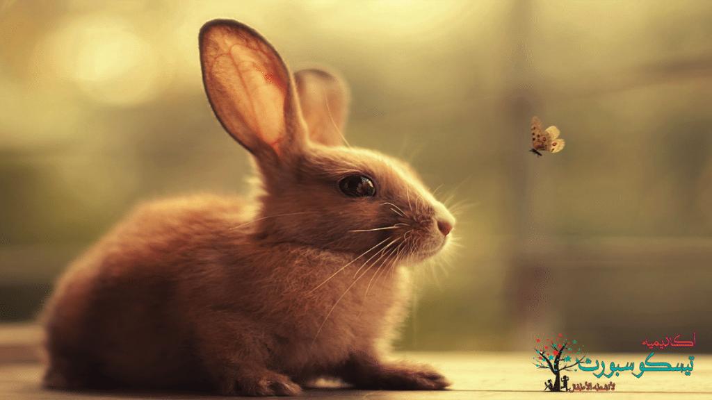 الأرنب يحلم