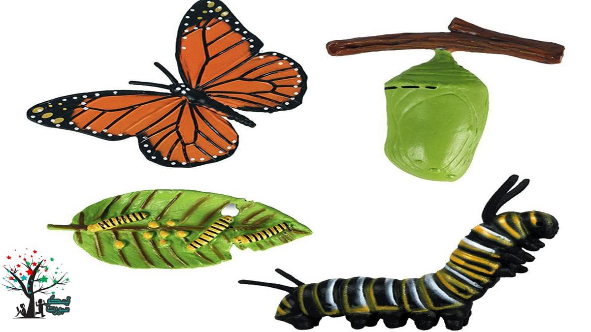 لعبة دورة حياة الفراشة